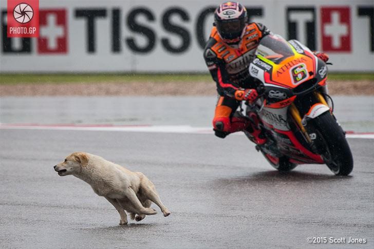 Первая практика MotoGP была приостановлена красными флагами из-за... собаки